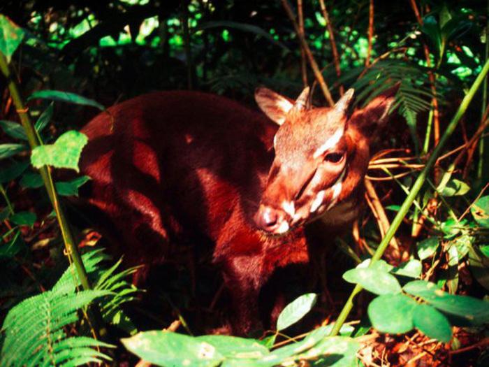 Những động vật bên bờ tuyệt chủng - Ảnh 10.