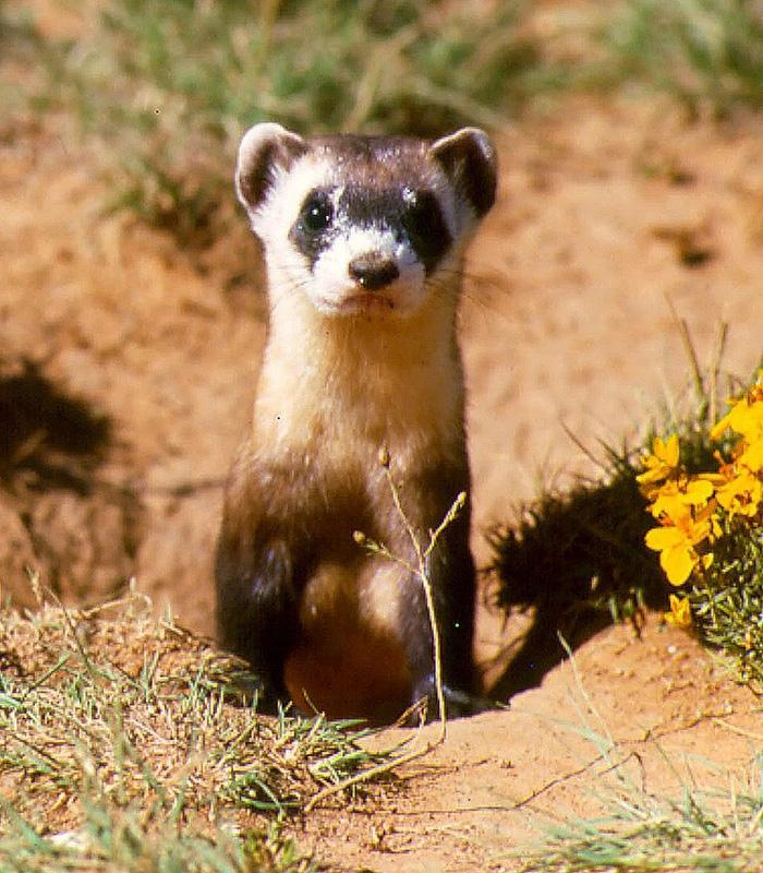 Những động vật bên bờ tuyệt chủng - Ảnh 6.