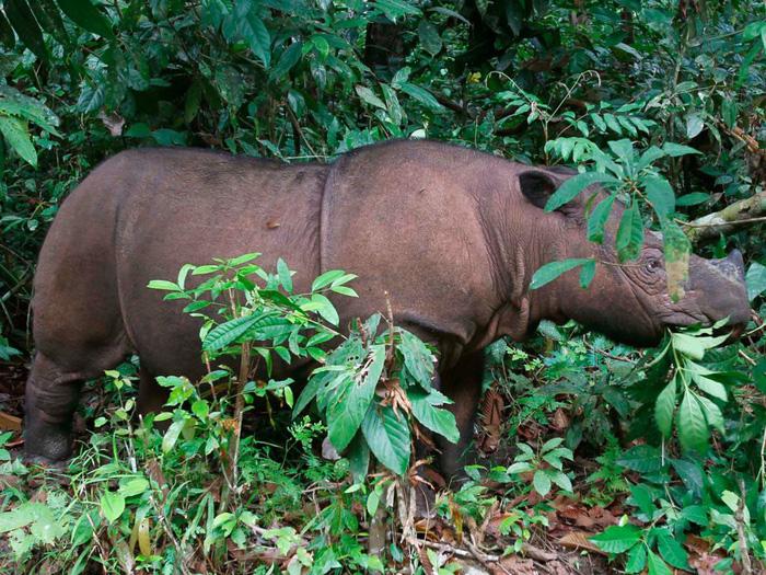 Những động vật bên bờ tuyệt chủng - Ảnh 8.