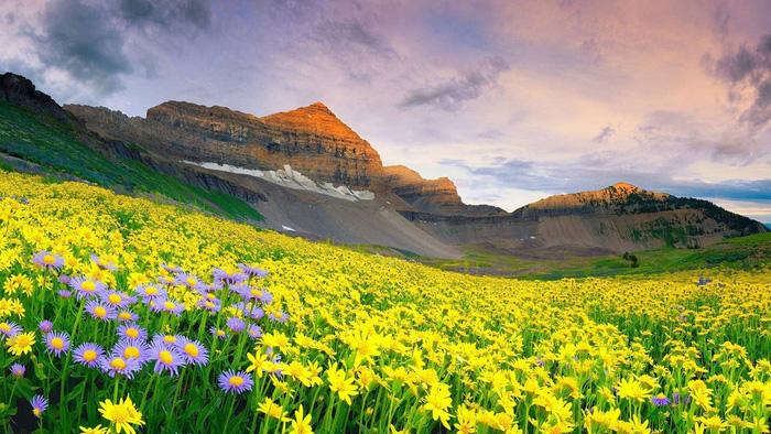 7 nơi ngắm hoa mùa xuân đẹp ngất ngây - Ảnh 4.