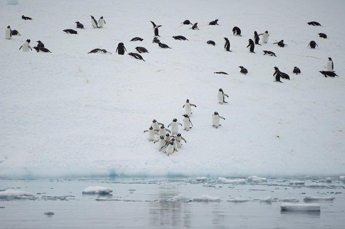 Ngắm vẻ đẹp băng giá và chim cánh cụt ở Nam cực - Ảnh 10.