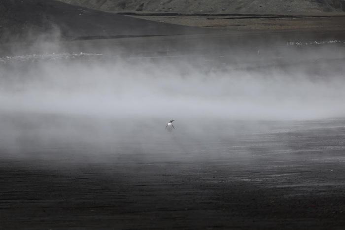 Ngắm vẻ đẹp băng giá và chim cánh cụt ở Nam cực - Ảnh 15.