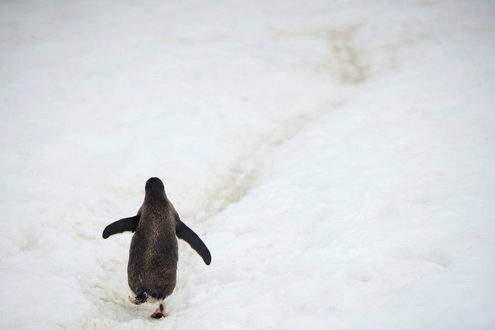 Ngắm vẻ đẹp băng giá và chim cánh cụt ở Nam cực - Ảnh 8.