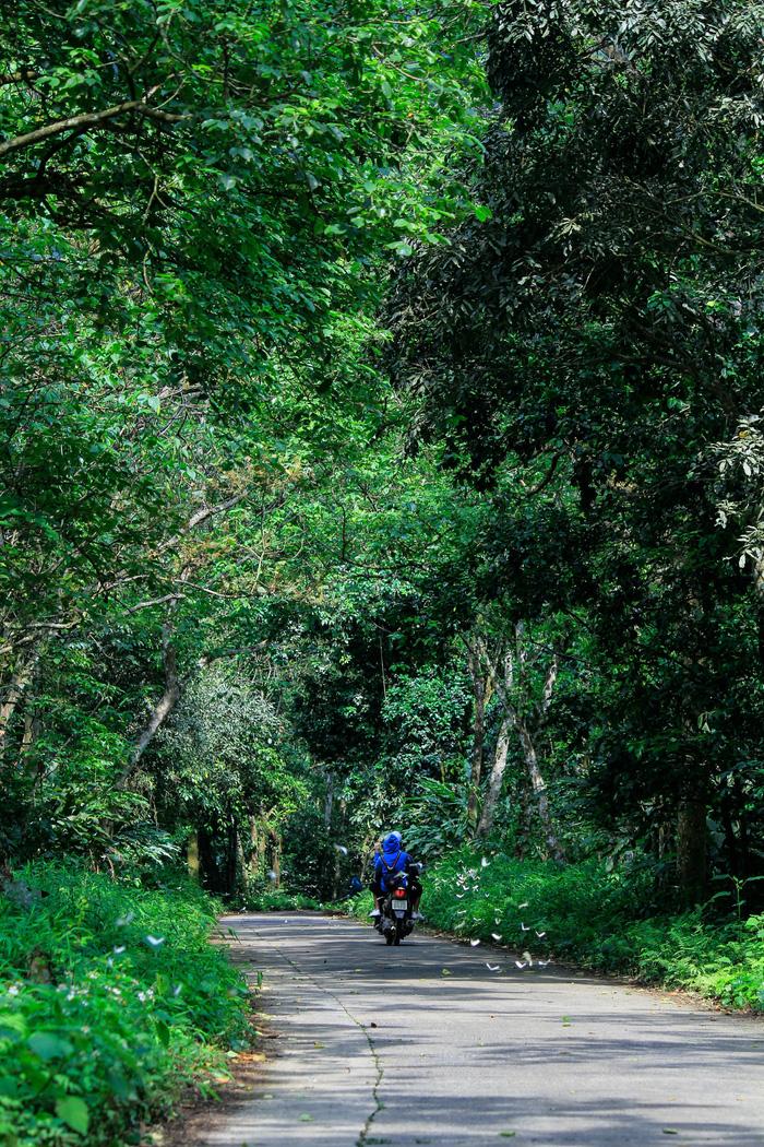 Tháng 4, đến rừng Cúc Phương săn bướm - Ảnh 8.