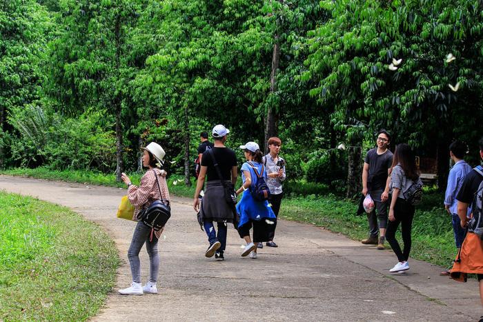 Tháng 4, đến rừng Cúc Phương săn bướm - Ảnh 10.
