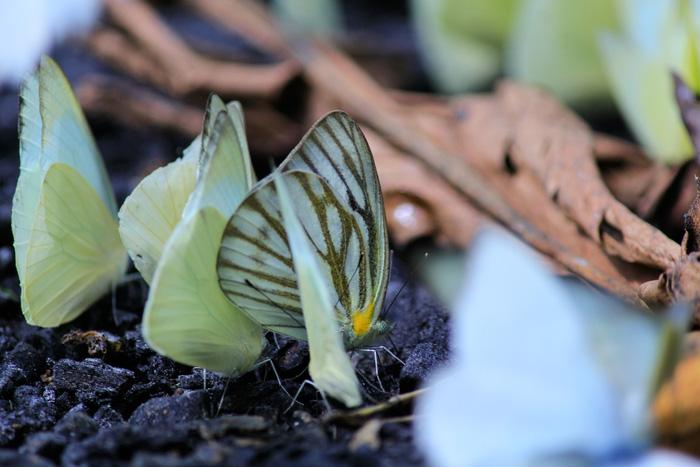 Tháng 4, đến rừng Cúc Phương săn bướm - Ảnh 2.