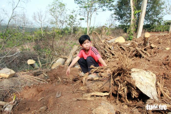 PV Tuổi Trẻ lần tìm cây đa sộp siêu khủng - Ảnh 2.