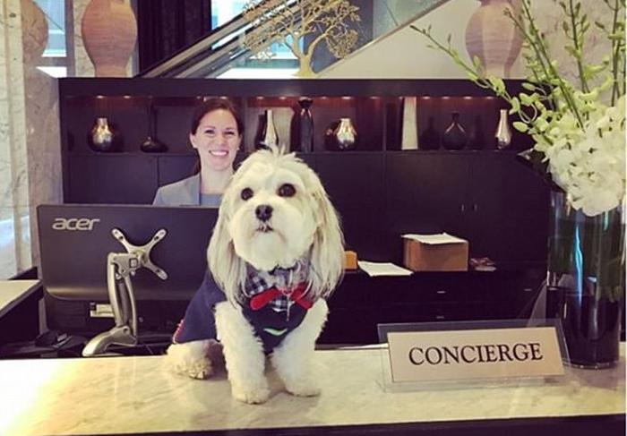 Khách sạn Mỹ cho mượn chó cưng để giải sầu - Ảnh 2.
