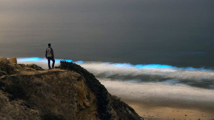Đi canh sóng biển ma quái phát sáng trong đêm - Ảnh 2.
