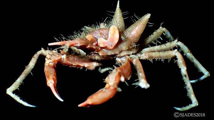 Phát hiện các sinh vật 'ngoài hành tinh' dưới đáy biển Indonesia - Ảnh 3.