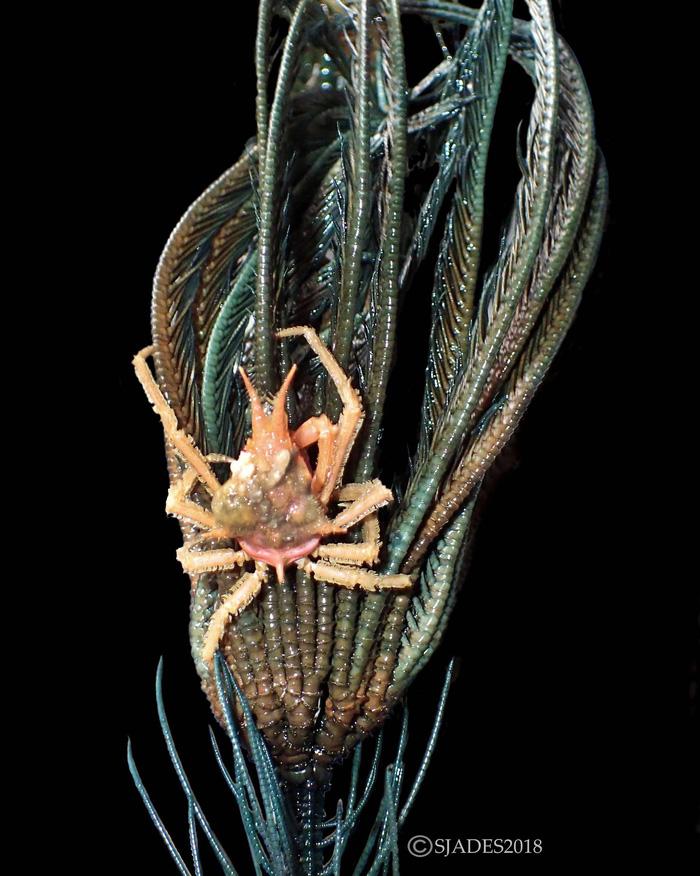 Phát hiện các sinh vật 'ngoài hành tinh' dưới đáy biển Indonesia - Ảnh 4.