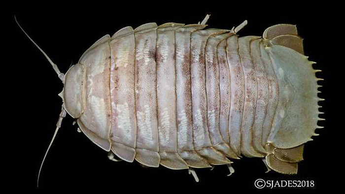 Phát hiện các sinh vật 'ngoài hành tinh' dưới đáy biển Indonesia - Ảnh 7.