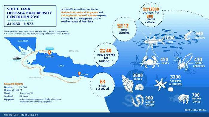 Phát hiện các sinh vật 'ngoài hành tinh' dưới đáy biển Indonesia - Ảnh 2.
