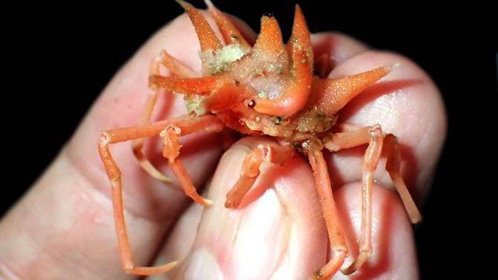 Phát hiện các sinh vật 'ngoài hành tinh' dưới đáy biển Indonesia - Ảnh 1.