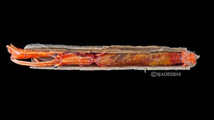 Phát hiện các sinh vật 'ngoài hành tinh' dưới đáy biển Indonesia - Ảnh 6.