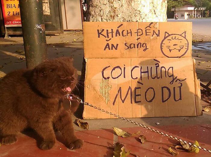 Chú mèo giúp chủ canh quán cơm để... giảm cân - Ảnh 1.