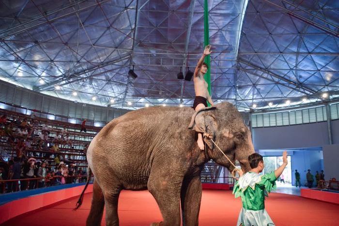 Đề nghị cấm biểu diễn xiếc thú ở công viên Đầm Sen - Ảnh 1.