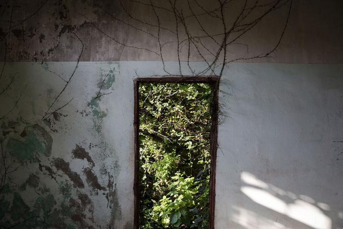 Làng chài phủ thảm thực vật xanh tươi ở Trung Quốc - Ảnh 7.