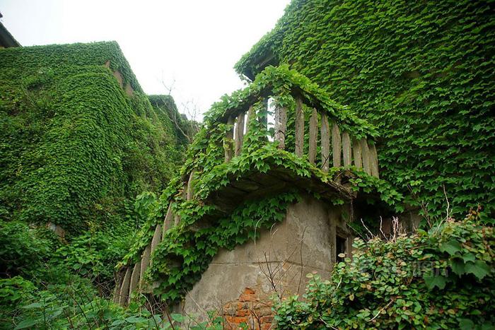Làng chài phủ thảm thực vật xanh tươi ở Trung Quốc - Ảnh 11.