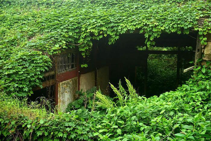Làng chài phủ thảm thực vật xanh tươi ở Trung Quốc - Ảnh 14.
