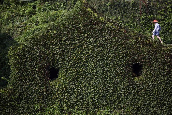 Làng chài phủ thảm thực vật xanh tươi ở Trung Quốc - Ảnh 2.