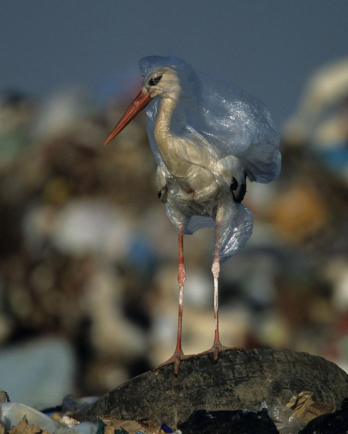 Ám ảnh vì thế giới ngập trong rác thải nhựa - Ảnh 5.
