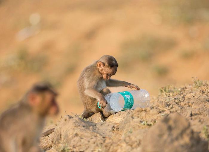 Ám ảnh vì thế giới ngập trong rác thải nhựa - Ảnh 10.