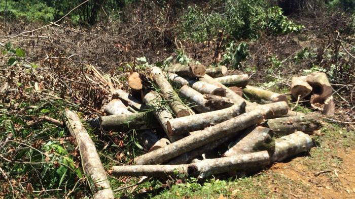 Thêm vụ phá rừng sản xuất ở Thanh Hóa - Ảnh 3.