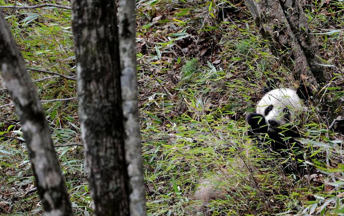 12 loài quý hiếm thoát số phận tuyệt chủng nhờ bảo tồn - Ảnh 10.