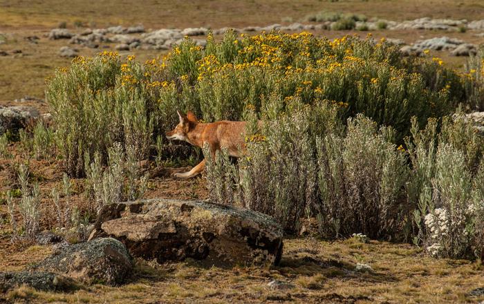 12 loài quý hiếm thoát số phận tuyệt chủng nhờ bảo tồn - Ảnh 12.