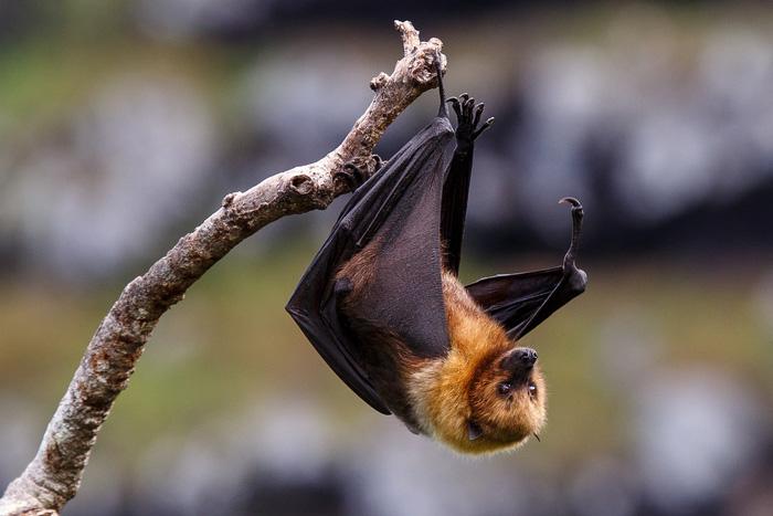 12 loài quý hiếm thoát số phận tuyệt chủng nhờ bảo tồn - Ảnh 3.