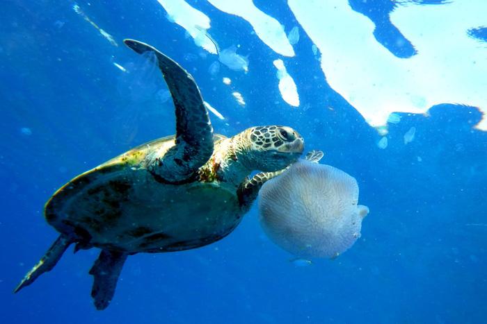 12 loài quý hiếm thoát số phận tuyệt chủng nhờ bảo tồn - Ảnh 8.
