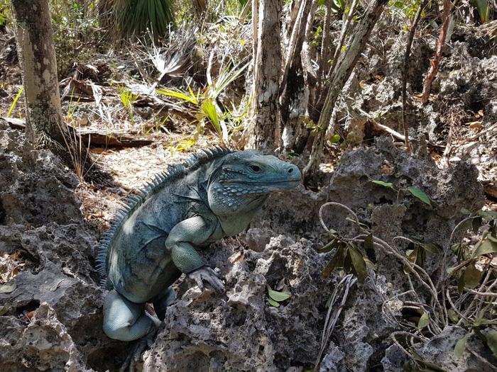 12 loài quý hiếm thoát số phận tuyệt chủng nhờ bảo tồn - Ảnh 9.