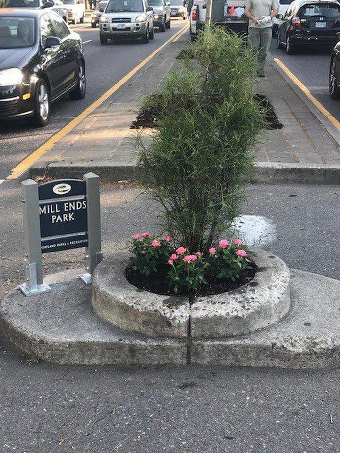 Công viên nhỏ nhất thế giới bé bằng một chậu hoa - Ảnh 8.