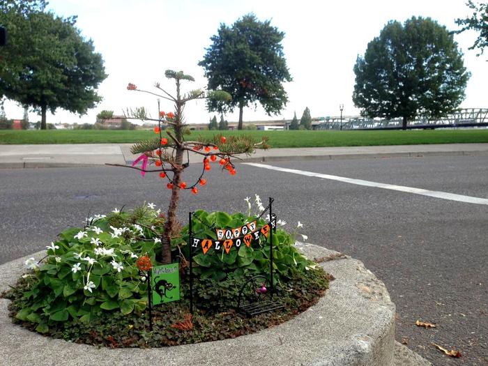 Công viên nhỏ nhất thế giới bé bằng một chậu hoa - Ảnh 3.
