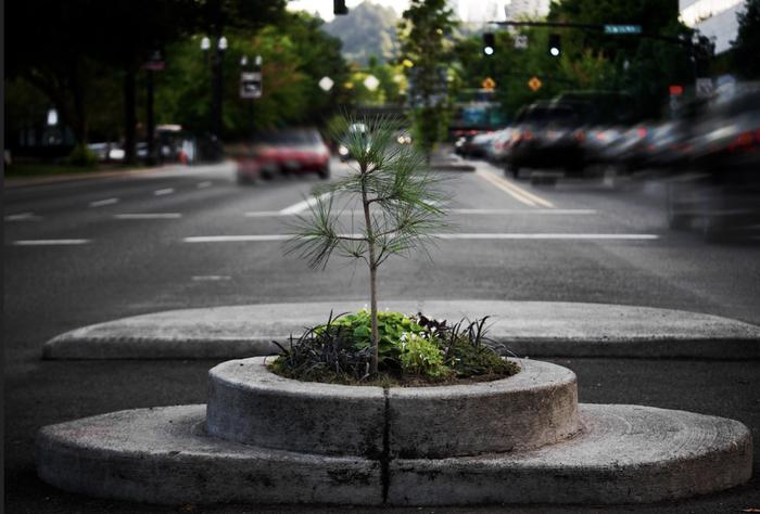 Công viên nhỏ nhất thế giới bé bằng một chậu hoa - Ảnh 2.