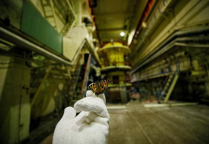 Thiên nga nằm trên rác - ảnh khoa học ấn tượng nhất tháng 4 - Ảnh 4.