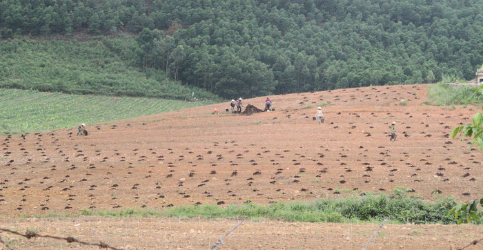 Bắt nguyên tổng giám đốc công ty chăn nuôi chiếm đoạt 110 tỉ - Ảnh 2.