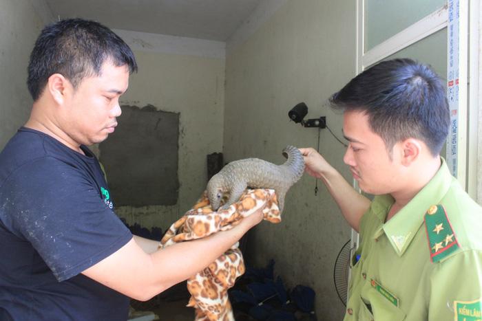 Bắt giữ xe tải chở 74 con tê tê, gửi sang rừng Cúc Phương - ảnh 1