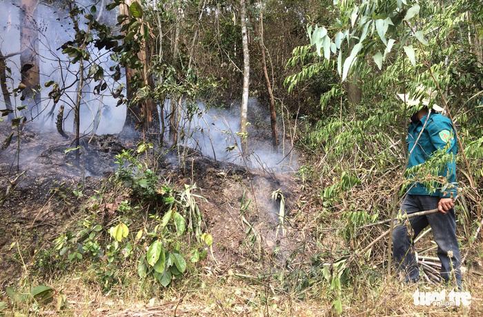 3 vụ cháy rừng liên tiếp ở Nghệ An gây thiệt hại nặng nề