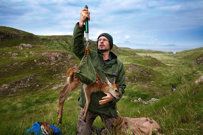 Đến đảo Scotland khám phá sự sống hươu đỏ - Ảnh 10.