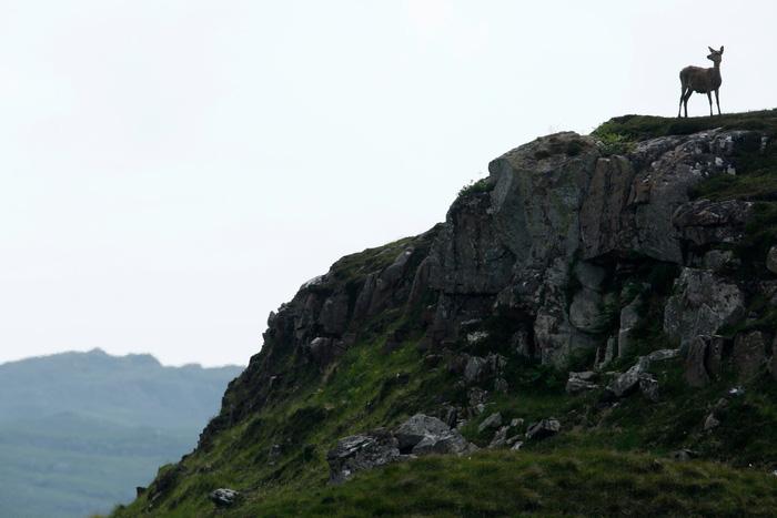 Đến đảo Scotland khám phá sự sống hươu đỏ - Ảnh 2.