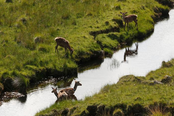 Đến đảo Scotland khám phá sự sống hươu đỏ - Ảnh 3.