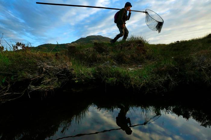 Đến đảo Scotland khám phá sự sống hươu đỏ - Ảnh 7.