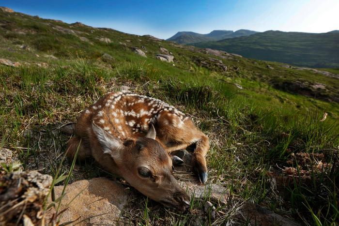Đến đảo Scotland khám phá sự sống hươu đỏ - Ảnh 8.