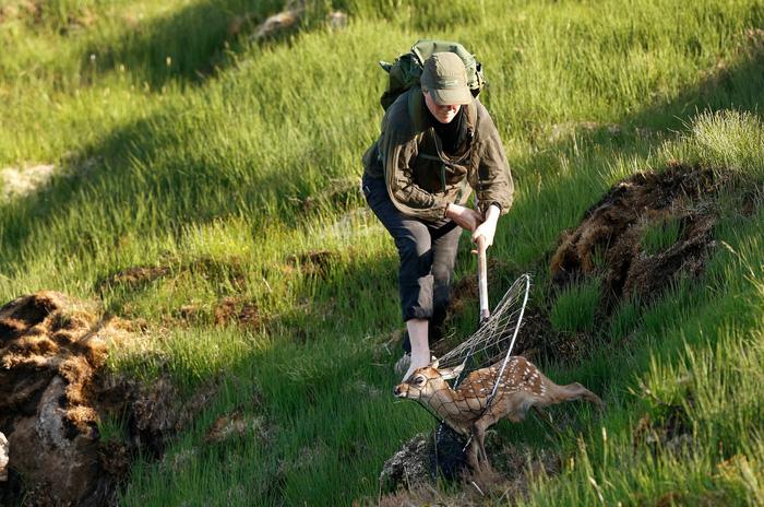 Đến đảo Scotland khám phá sự sống hươu đỏ - Ảnh 9.