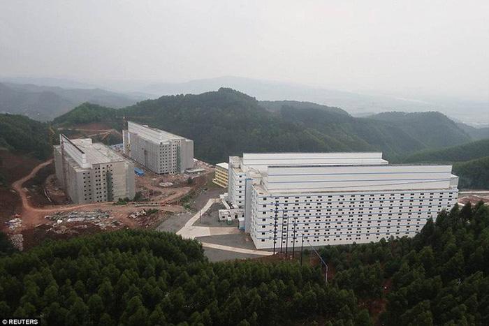 Khách sạn long lanh chỉ để nuôi heo ở Trung Quốc - Ảnh 1.