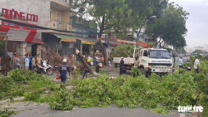 Ba người đi xe máy bị thương do cây xà cừ bật gốc - Ảnh 3.