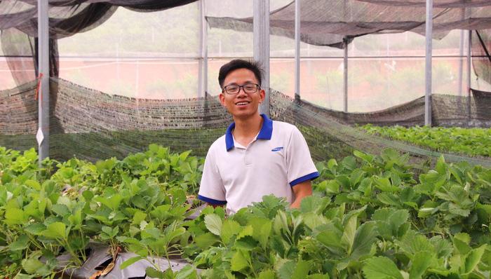 Anh Đào Trọng Hùng tại vườn dâu Chimi ở đồi thông Bản Áng - Ảnh: HÀ THANH