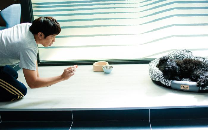 Thái Hòa, Phương Anh Đào vật lộn trên phim trường với… chó! - Ảnh 3.